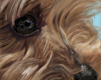 Yorkie, Yorkshire Terrier Close Up