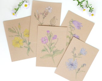 Set / 5 postcards meadow flowers in July