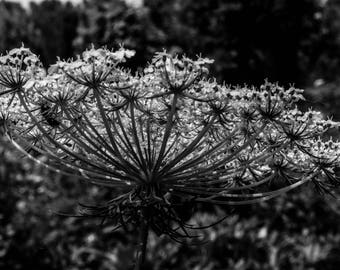 Black and White Botany