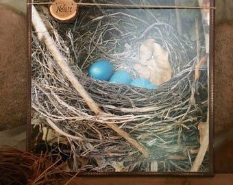 Robin's Nest Photo on Canvas