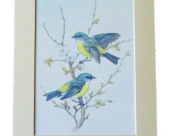 Set of 3 Bird and Botanical Illustrations • Three Different Illustrations