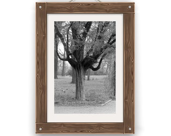 Photo - CityScape- Łódź-Poland-Tree-Wall Art-Urban Photography-Black and White-Modern Home Decor-Contemporary
