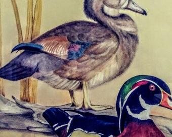 Pastel wood ducks