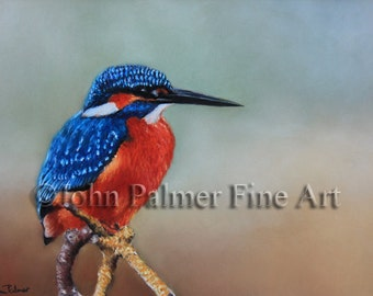 Kingfisher painting - 'The waiting game' Kingfisher print from my original pastel painting.