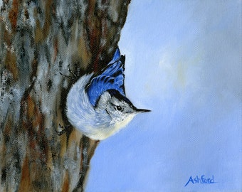 White Breasted Nuthatch, Giclee Canvas Print