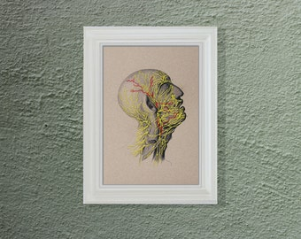 Anatomy Art. Nerves of the Head. Doctor's Gift. Anatomy. Nervous System of the Head. Paper Embroidery. Science Art. Medical Student Gift