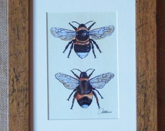 Bumble Bee Picture Bumble Bee Print Bumble Bee Art Bee Print Bees Wall Art - Always a popular choice! Print of the original painting framed.