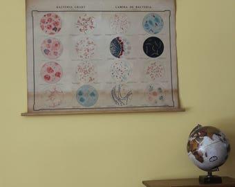Pathogenic Bacteria Wall Chart