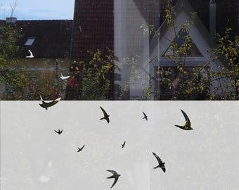 Window Film Flying Birds, Decorative Window Privacy Film flock of birds, Customizable Privacy Film Birds, Bird Bathroom Privacy Decal
