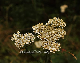 Nature, Outdoors, Flower, Digital Print, Photography