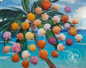 SWFL Seashells!  Lot of Colorful Orange and Purple Scallop Shells