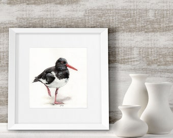 Beach decor, Oystercatcher illustration, Limited Edition bird art print, Watercolor painting