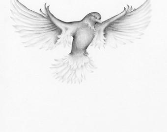 Bird Drawing Pencil Drawing Illustration of a Bird Wanderlust Fine Art Print of my Original Artwork Black and White Wall Art Home Decor