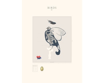BIRDS III - Anatomy of a Black Grouse- Bird Illustration- Bird Poster- Mudd Illustration- Charlotte Mudd