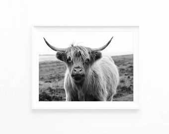 Highland Bull Cow Art Print, Scottish Cow Black and White Photography, Boho Decor, Bohemian Decor, Printable Wall Art Download, hc3c2bw
