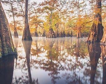 """Suwannee Valley, Cypress, Fall Foliage, Nature, Water, Large Wall Print, Fine Art Photography - """"The Ancient Ones"""""""
