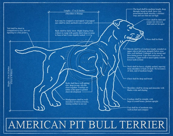 Pit bull blueprint elevation pit bull art pit bull wall like this item malvernweather Gallery