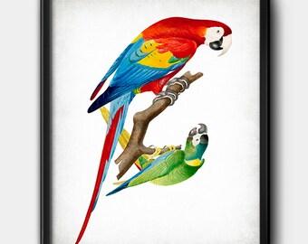 Parrots · Instant Download · Birds · Exotic · Vintage · Printable · Digital File #216
