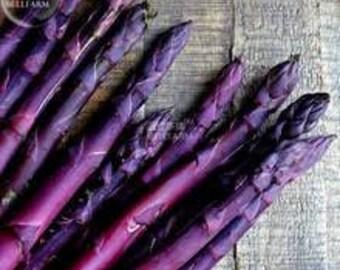 Heirloom Asparagus Seeds, FREE SHIPPING, Purple Sweet, 15 Seeds, Mary Washington Asparagus Seeds, 100 seeds