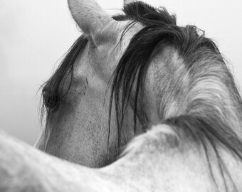 Horse Photography Black and White Horse Photograph