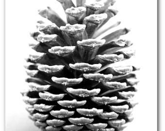 Pinecone Print, Black and White Photography, Pinecone Art, Forest Pinecone, Modern Nature Decor, 8 x 10 inches, Unframed