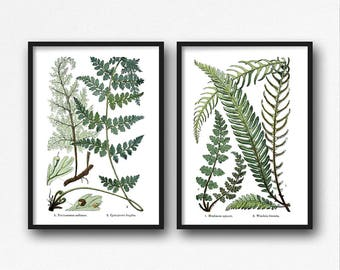 Botanical Print Set, Vintage, Botanical Illustration, Fern Print, Botanical, Diptych, Wall Art Set of 2, 2 Piece Wall Art, Printable Art