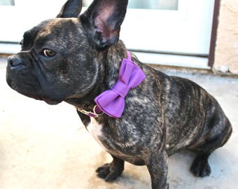 Purple Orchid Layered Dog Bow Tie - Optional Collar and Leash - Bright Purple