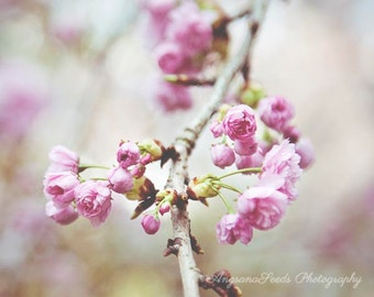 Spring photograph Pink flowers photo Cherry Blossoms photo sakura print floral flora square flower picture botanical wall art gift under 50