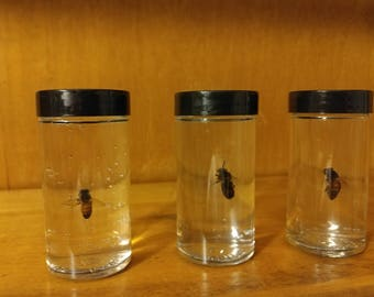 Honey Bee Bug Jars