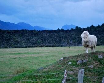 New Zealand Sheep Photography mountains grasslands clouds deep green