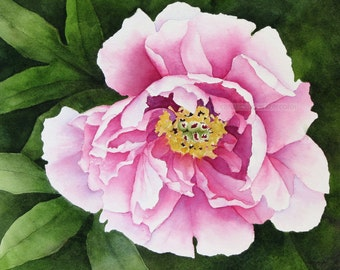 peony watercolor-peony painting-tree peony watercolor-tree peony painting-garden art-flower watercolor-flower painting-pink peony watercolor