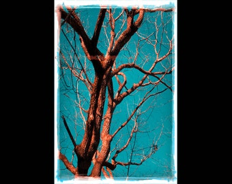 Teal Wall Art - Oak Tree Photography - Red and Teal Wall Art - Teal Photography - Winter Tree Photo - Old Oak Tree - Red and Turquoise