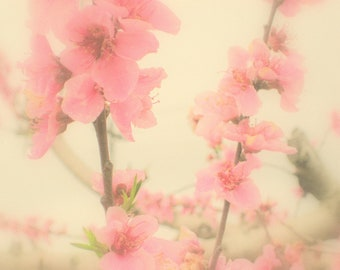 Peach Blossoms - Peaches and Cream Blooms - Rural Southern Peach Tree Orchard - Original Color Photograph by Suzanne MacCrone Rogers