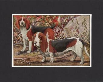 Beagle Print Basset Hound Print 1919 Vintage Dog Print by Louis Agassiz Fuertes Small Print of Beagle Dog & Basset Hound Dog Basset Print