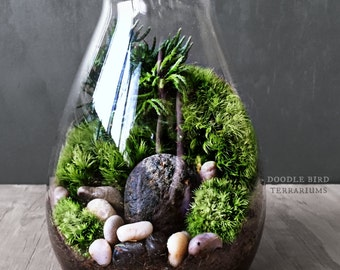Carafe Moss Terrarium Gift Set - Live Houseplants Office Decor - Miniature Garden Under Glass