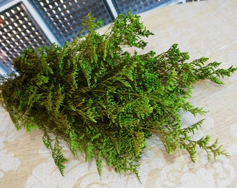 Caspia, Green Caspia, Preserved Caspia for Dried Florals or Wedding Bouquet - Large Bunch