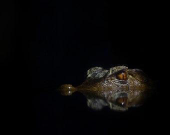 INSTANT DOWNLOAD PHOTO. The Crocodile Eye. Low light Portrait.