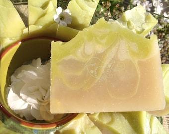 Vegan Soap Bar - Lime Light