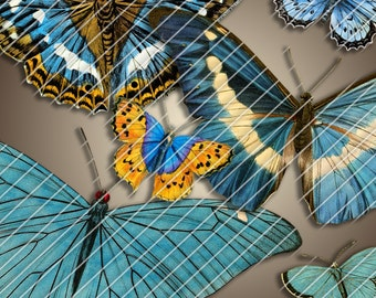 Digital Printable PNG BLUE BUTTERFLY collage for Framing Crafting or Transfer Art...Beautiful Antique Butterflies