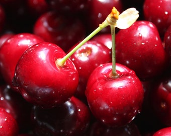Cherry Time Photograph