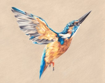 LIMITED EDITION | Kingfisher Drawing | Giclée Print | Wall Art | Colourful bird | Fine Art | from Original Drawing | Painting
