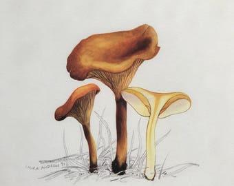 Mushroom PRINT in mount 37x37 By Laura Andrew - Chanterelle Toadstool ART