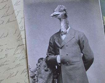 Oliver the Ostrich Man 5x7 Anthropomorphic print
