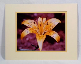 Yellow Flower Photography Print Picture Matted 11 x 14, Signed Photograph