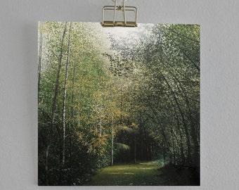The Hidden Path - Fine Art card - Trees - Woodland