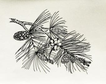 Pine Cone Original Ink Drawings