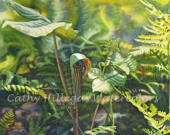 Jack In The Pulpit Art Watercolor Painting Print by Cathy Hillegas, 8x10, ferns, forest, woodland, green, yellow, purple, blue, brown