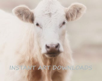 Dreamy cow portrait Instant Art Downloads 18 x 22 Cow size digital download photography professional stock nature  animals  livestock Cows