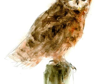Short-eared Owl watercolor painting - bird watercolor painting - 5x7 inch print - 0141