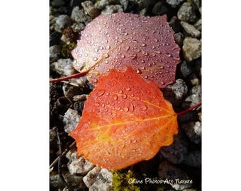 Poster 80x60cm à partir d'une photographie de Céline Photos Art Nature de feuilles d'automne.